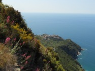 Looking down onto Corniglia
